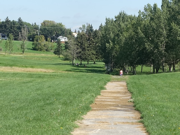 The golf course has become an informal off leash dog park.  The old cart path has become a walking path. The golf course is full of stands of mature trees like these ones.