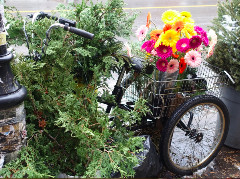 Loved this great use of bike as a prop for some winter greenery and summer flowers on the sidewalk in front of a florist shop.