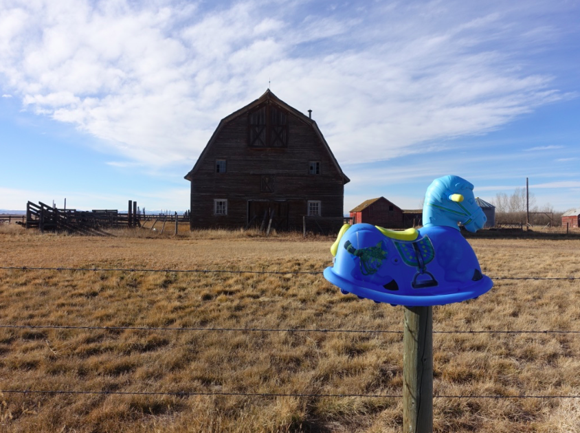It is always best to take the road less travelled. We found about 20 of these children's rocking horses on a farmer's fence post along Highway #845 as we headed north from Picture Butte back to Calgary from a fun weekend in Lethbridge.  We really must take more road trips in 2017.
