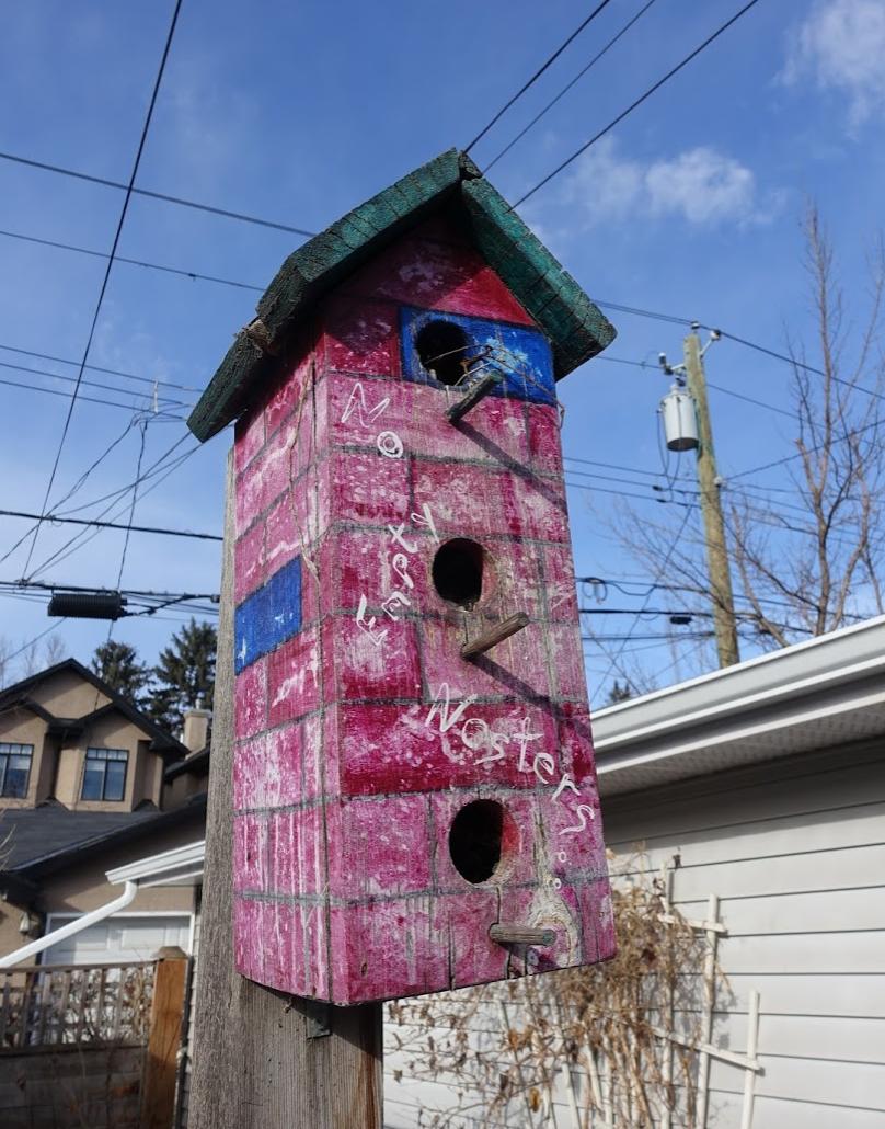 My death trap nest box.