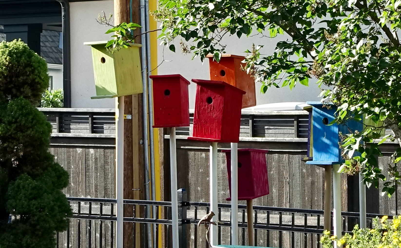 Loved these colourful front yard birdhouses.