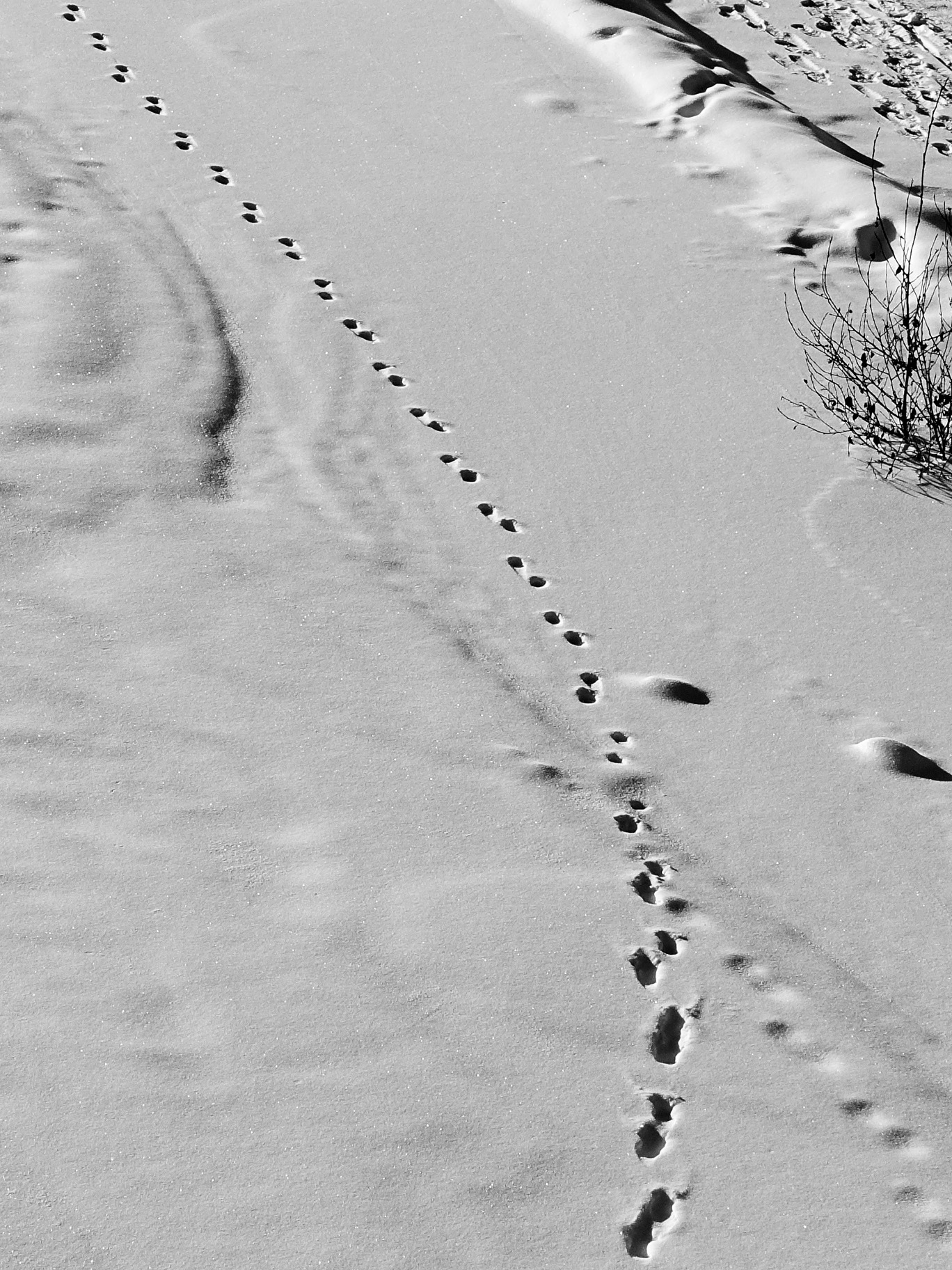 Flaneuring Footsteps, Calgary