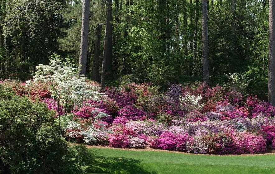 Augusta is part golf course, part botanical garden.