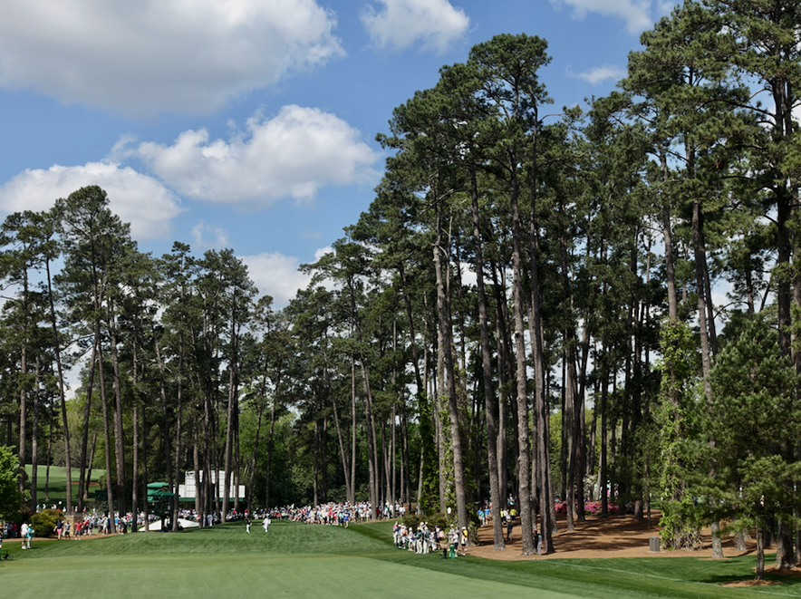 The Cathedral of Pines at Augusta National.