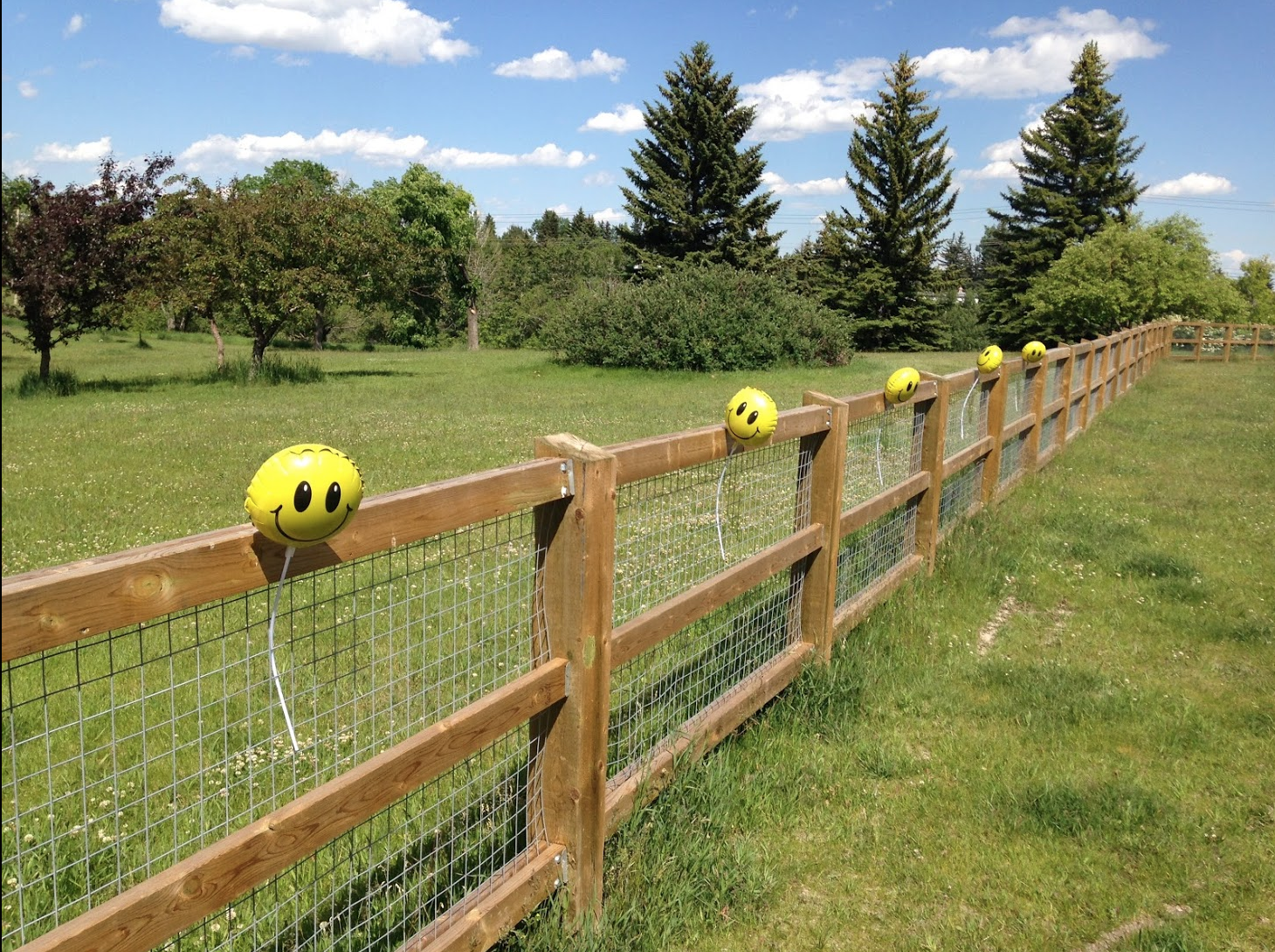 A new fence dividing River Park into an off-leash and on-leash area was part of the controversial renovations to the park.