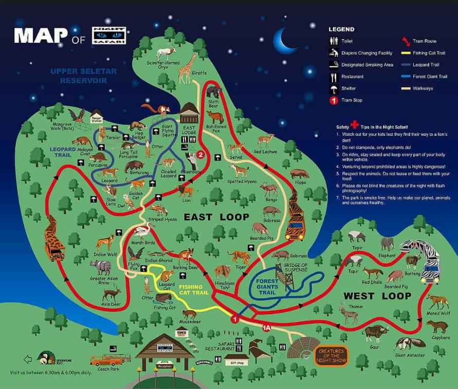 Night Safari: Only in Singapore!