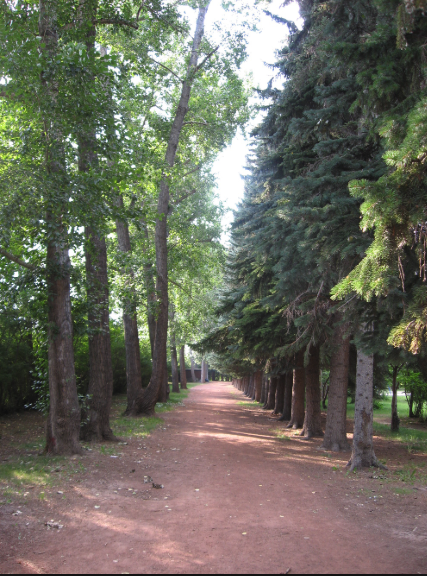 Calgary has over 5,000 parks offering lots of fun walks.