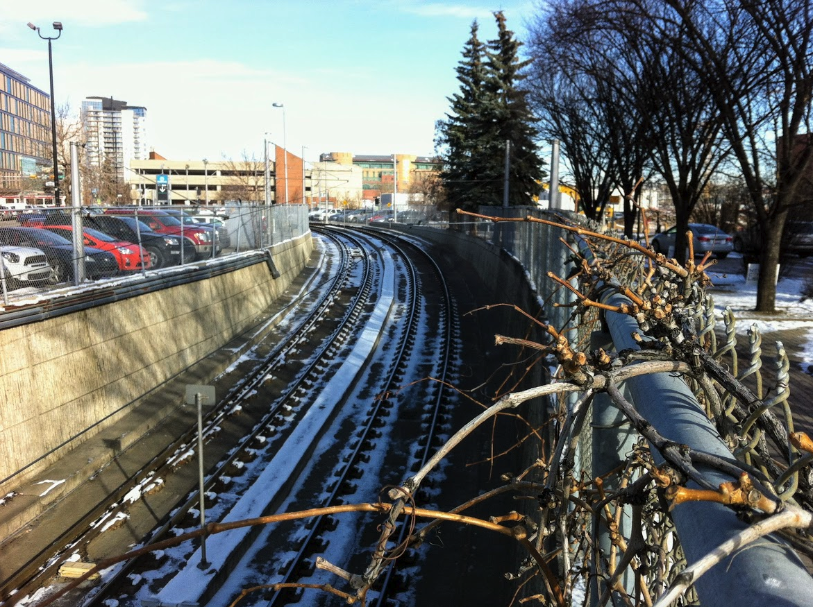The LRT tunnel divides the library site into two narrow strips of land on either side. They were once a small park and surface parking lot.