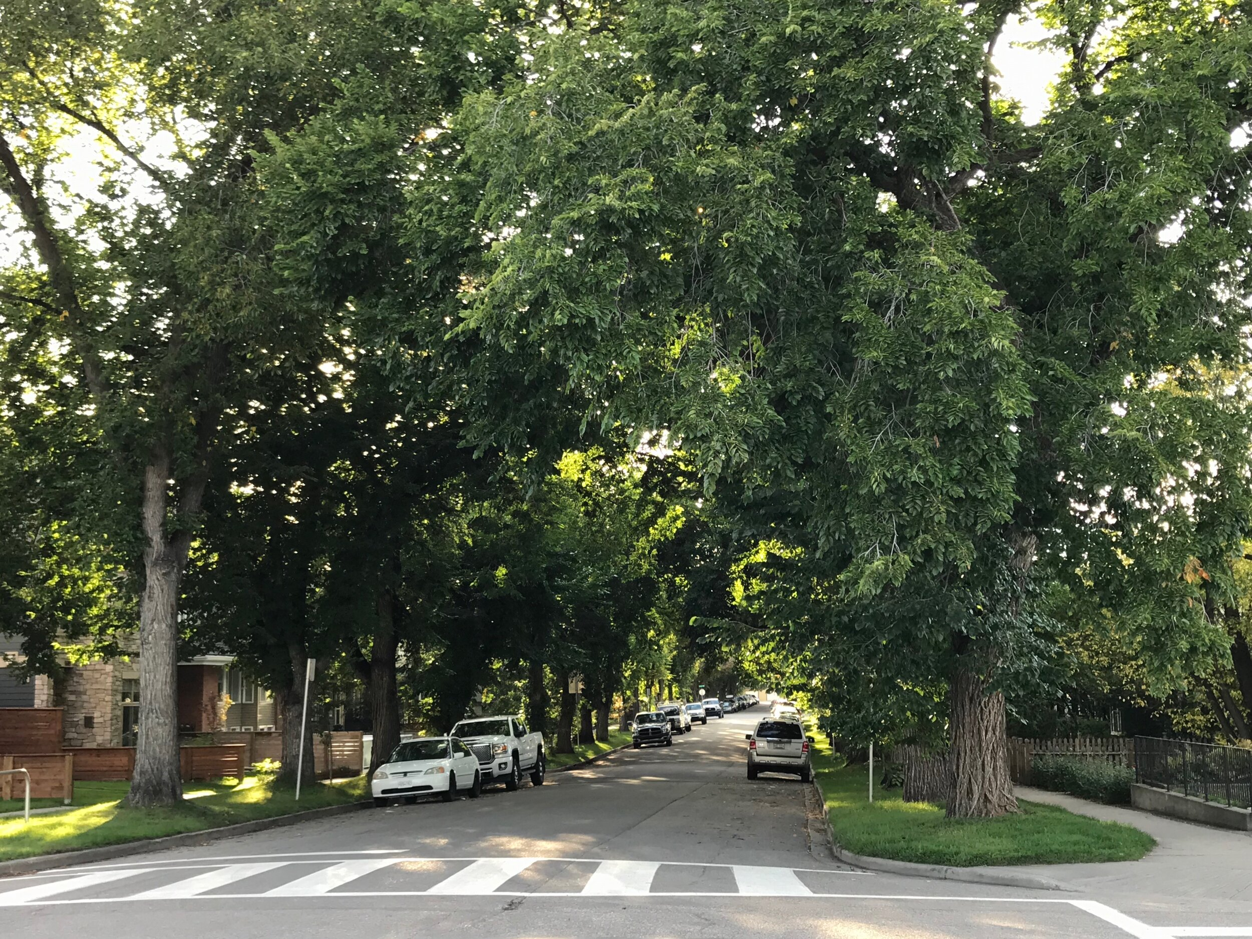 Sunalta has perhaps the best tree canopied streets in Calgary.