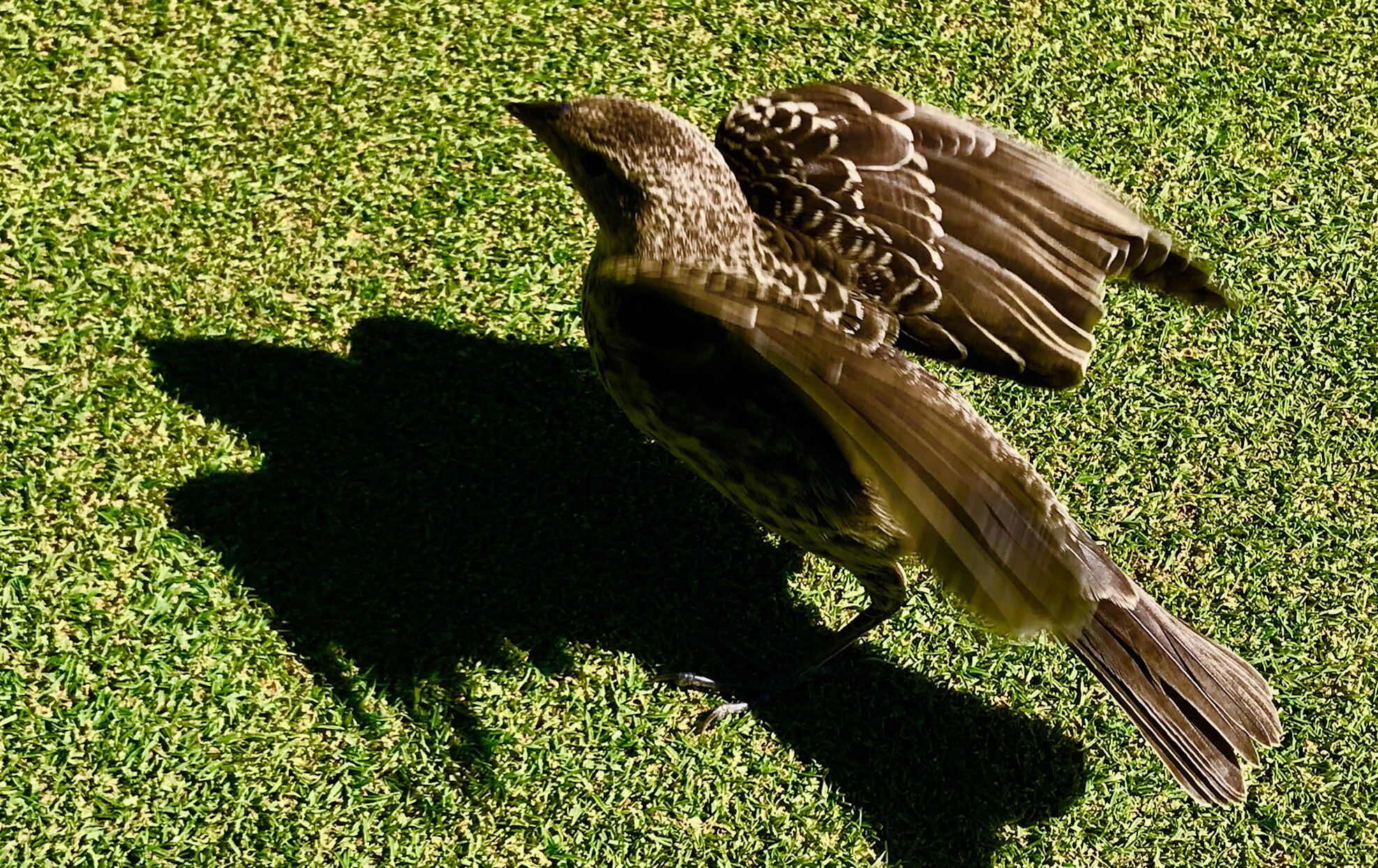 This guy swooped down right next to me to help me line up my putt. Can't remember if I made it or not.