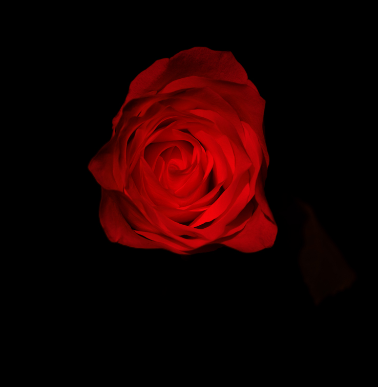 White Rose copy.jpg