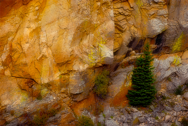 tree_cliff.jpg