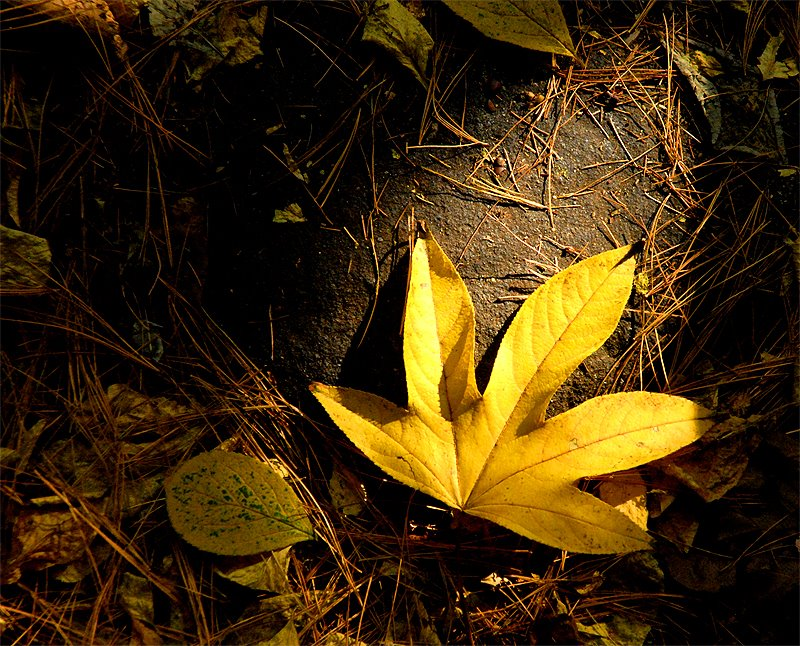 cal_leaf_yel.jpg