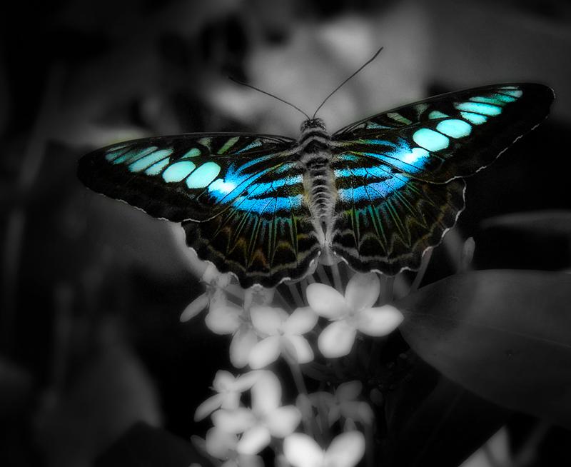 butterfly_blue.jpg