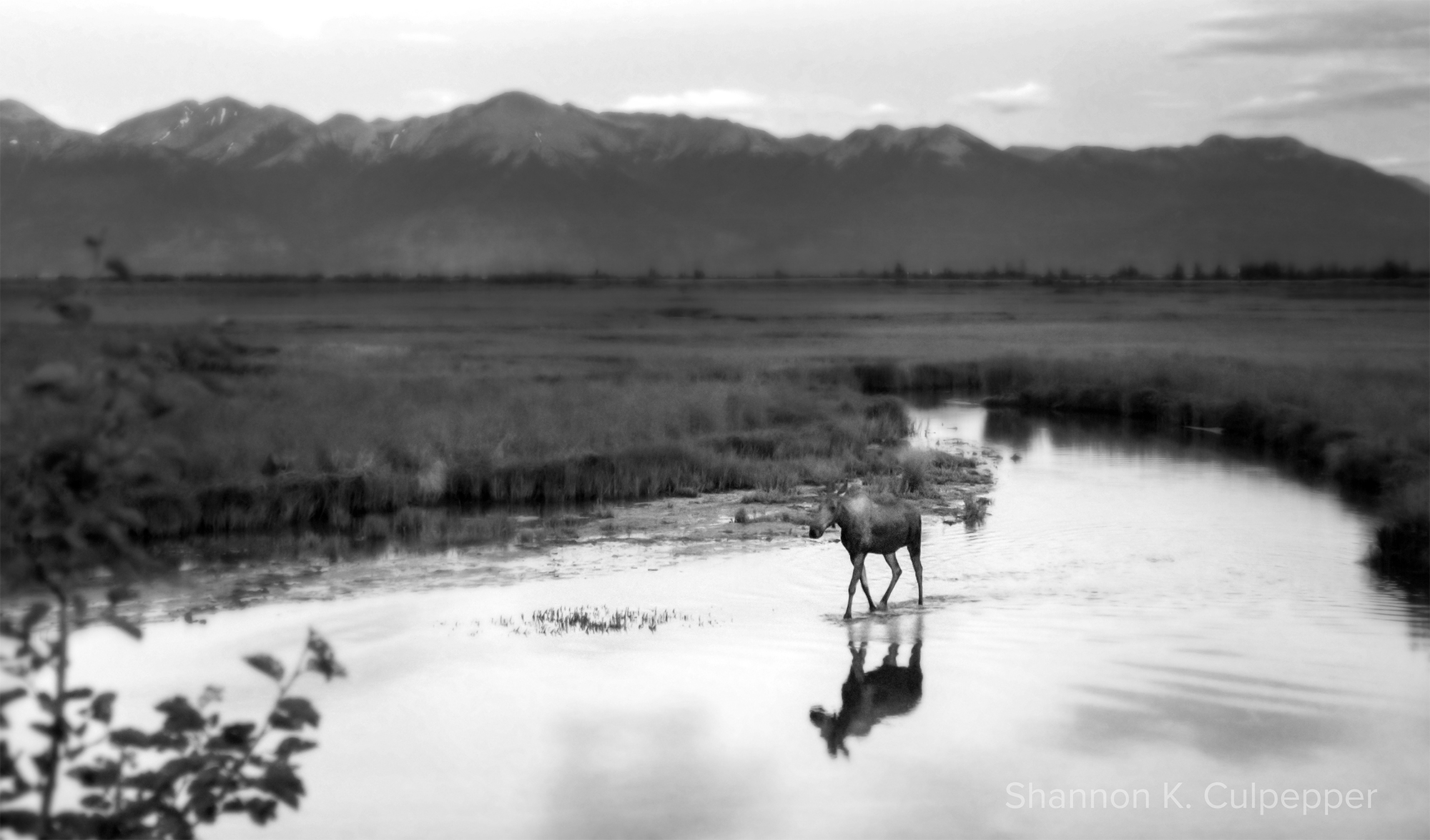 Shannon_Alaska_Moose_day1_better_sm.jpg