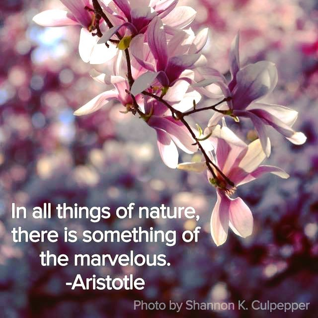 Hope you all have a wonderful weekend! Photo by Shannon K. Culpepper #spring #sunshine #simplepleasures #flowers #magnolia #aristotle #beauty #inpursuitofmagic #shannonkculpepper