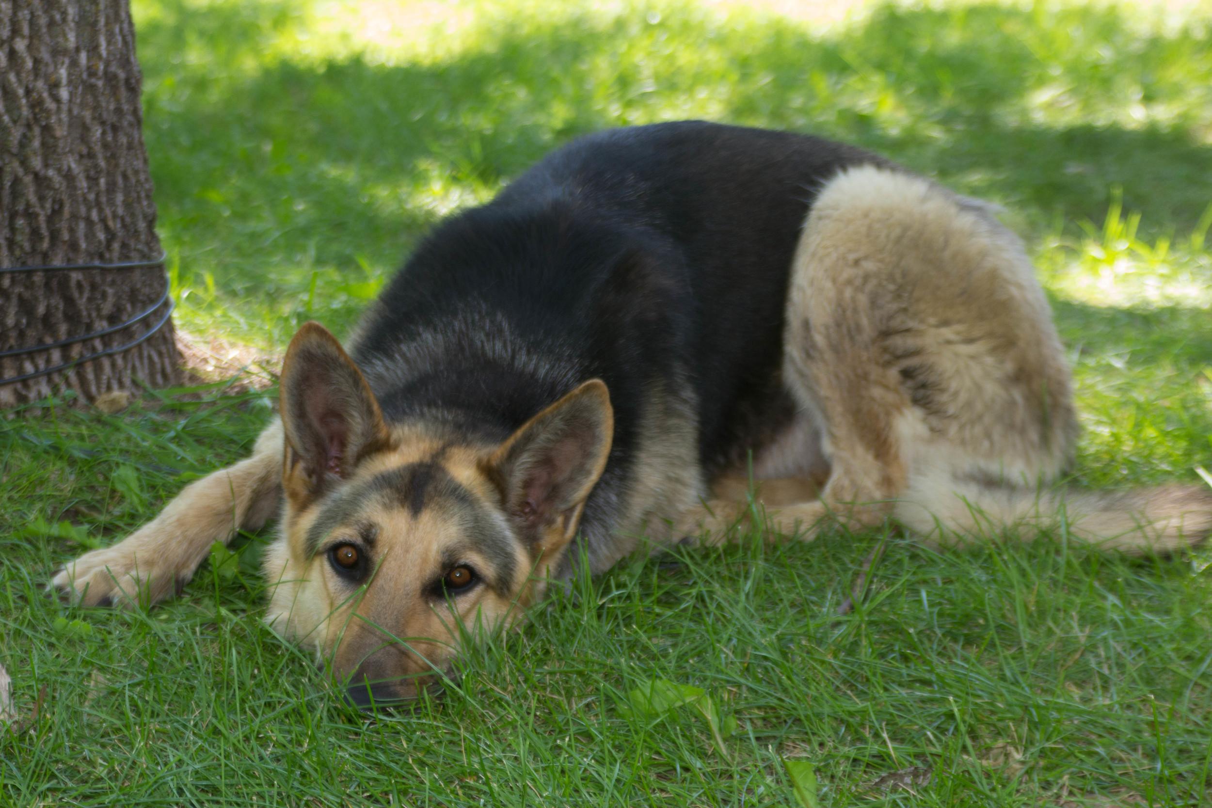 Max the Wonder Dog