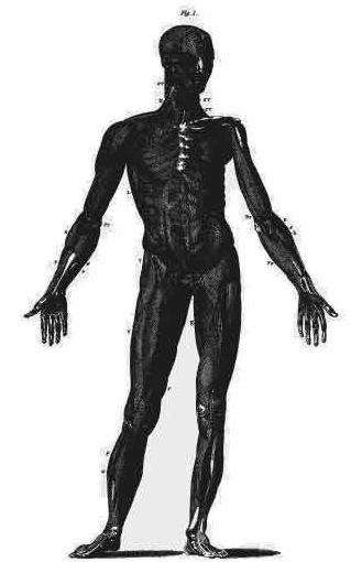 Anatomy2_retrovectors.jpg