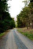Wolf Trap Drive