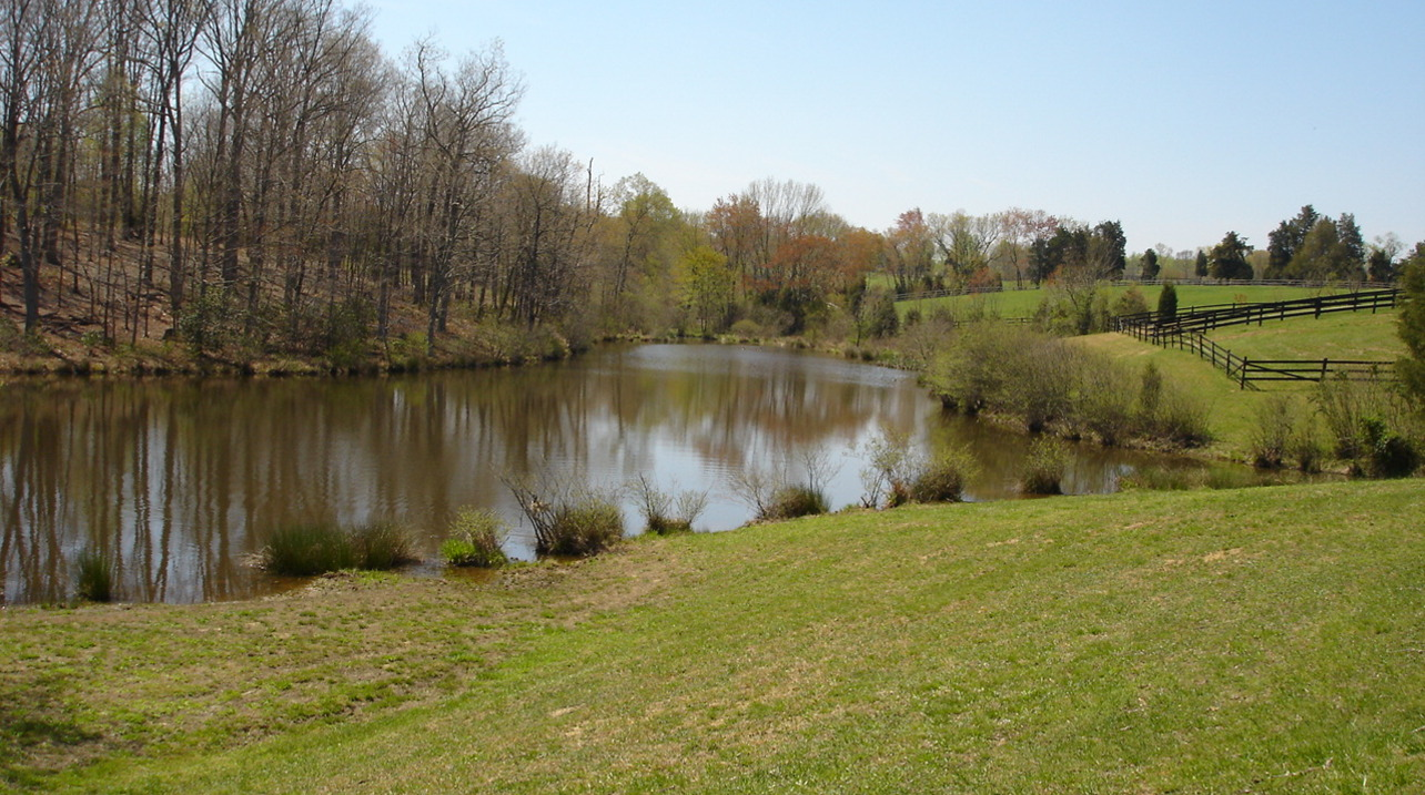 Pond in Late Fall