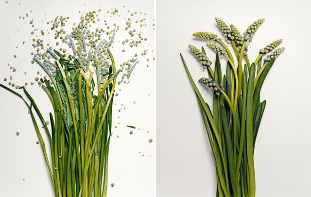broken-flowers-5.jpeg