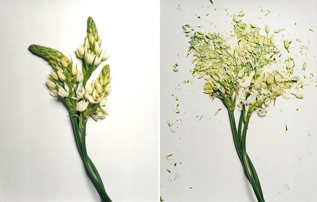 broken-flowers-7.jpeg