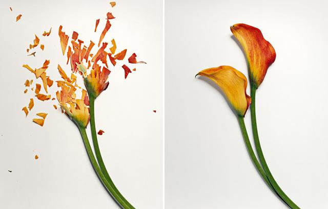 broken-flowers-8.jpeg