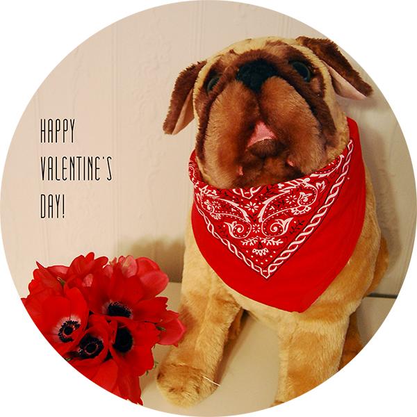 happy_valentine's_day_bulldog_red_anemones.jpg