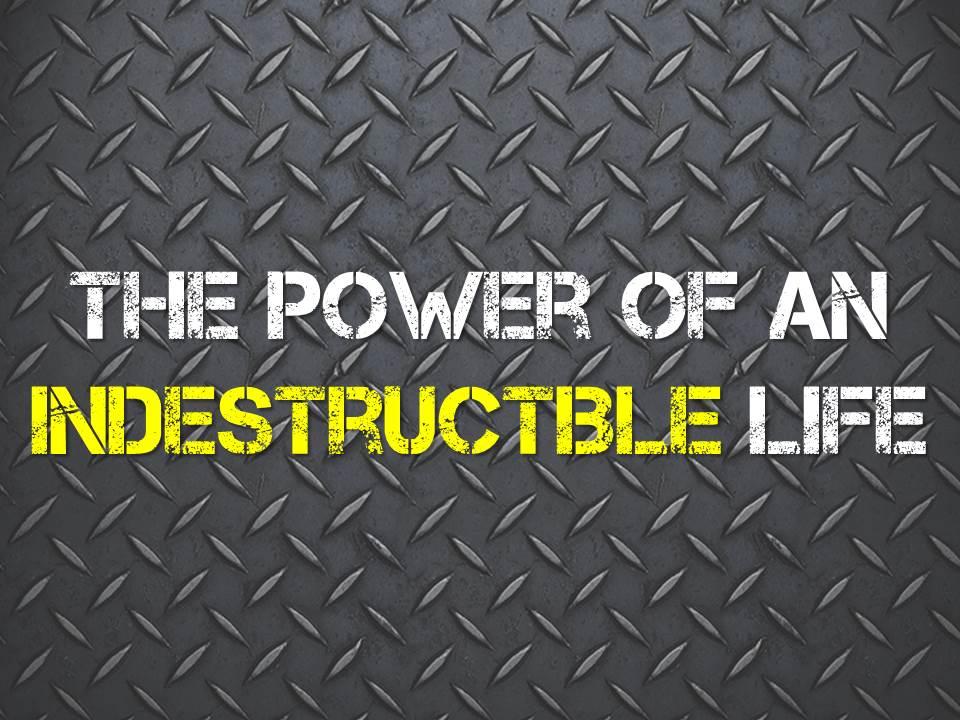 Indestructible Life.jpg