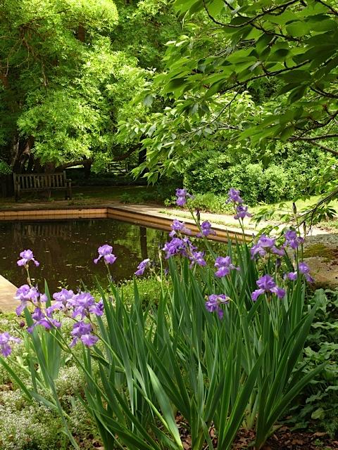 Irises and reflecting pool.jpg