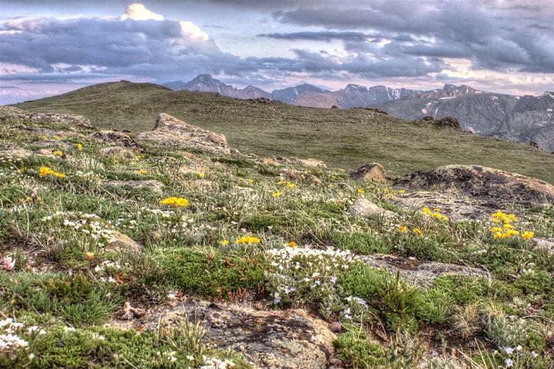 Ute Trail tundra, RMNP