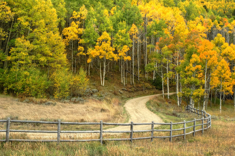 Grand County fall aspens