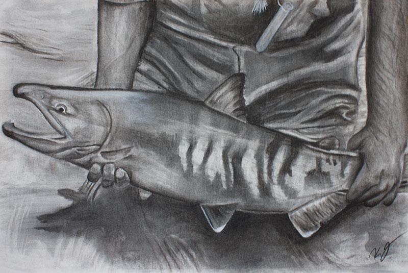 Willow Creek Alaska Chum Salmon