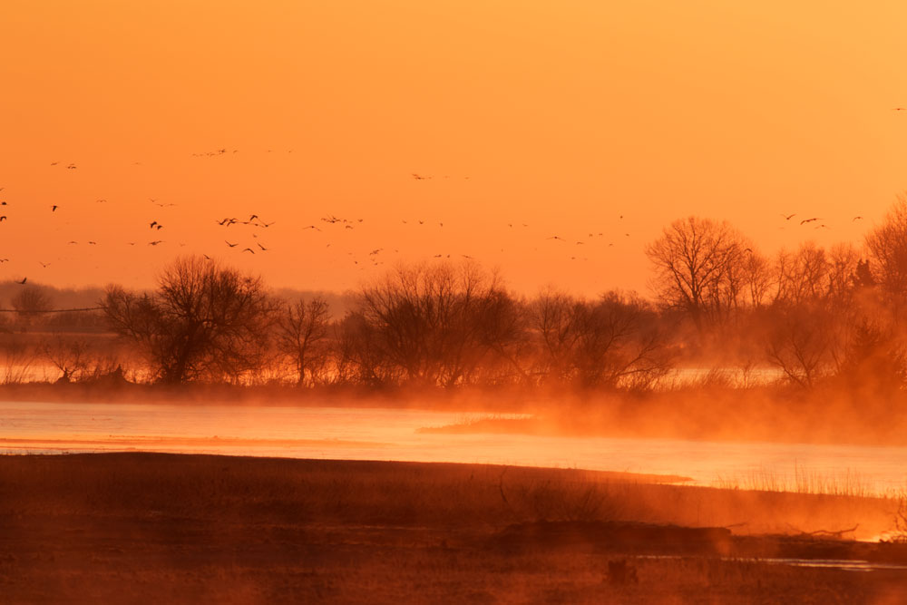 Sandhill Cranes at Sunrise on the Platte River