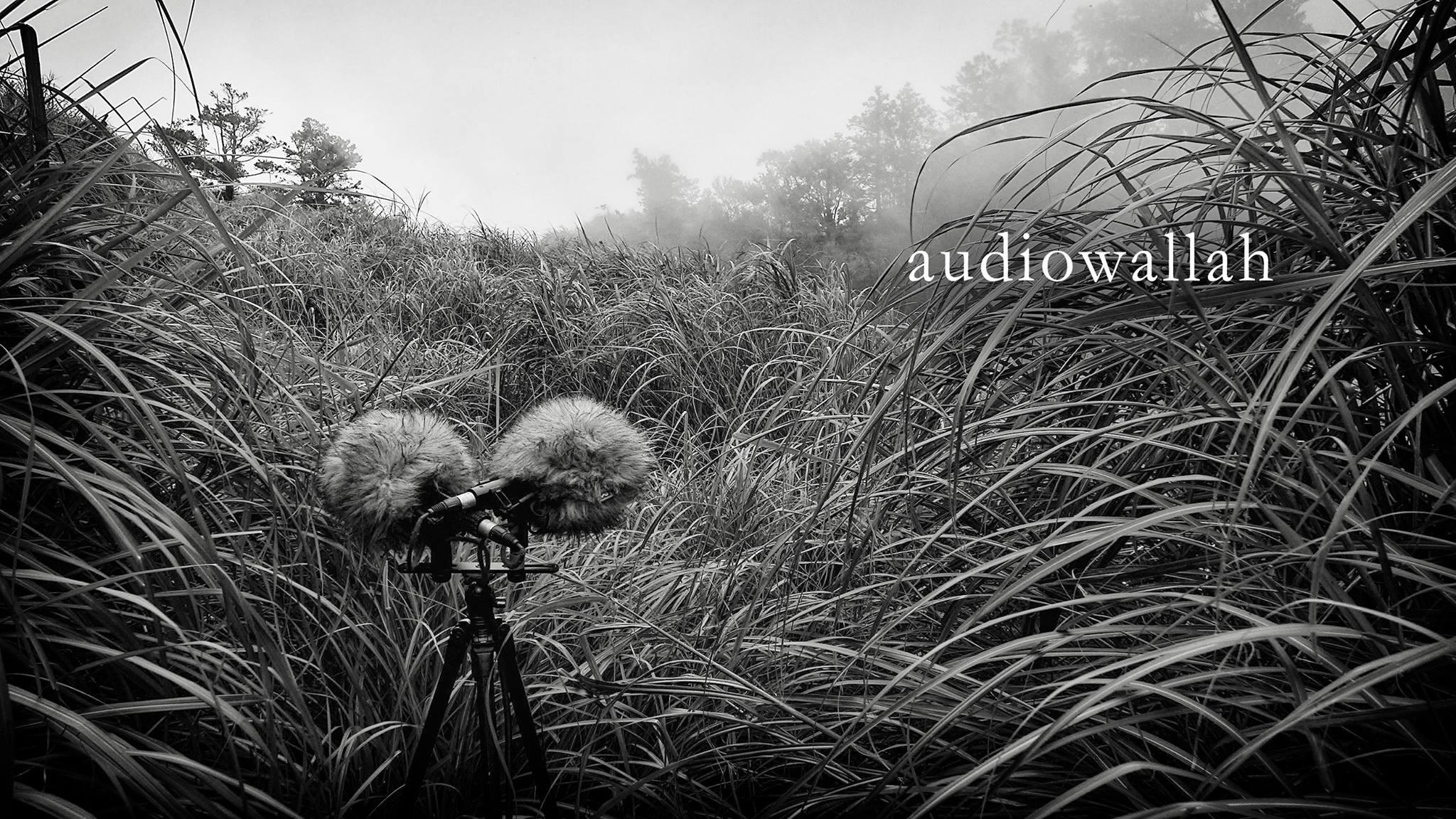 audiowallah.jpg