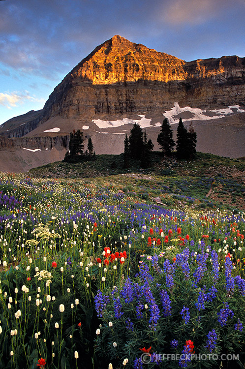 Wildflowers and Timp at Sunset