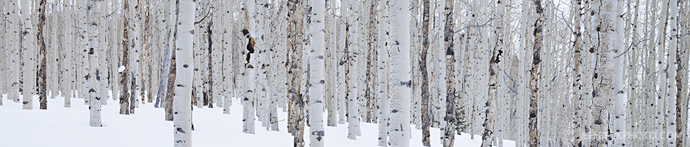 winter aspen panorama.jpg
