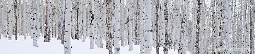 winter aspen panorama.jpg