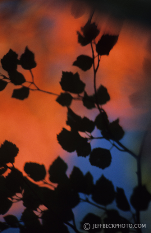 Watercolor Reflection
