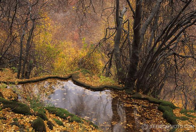 Autumn Spring Fed Pools