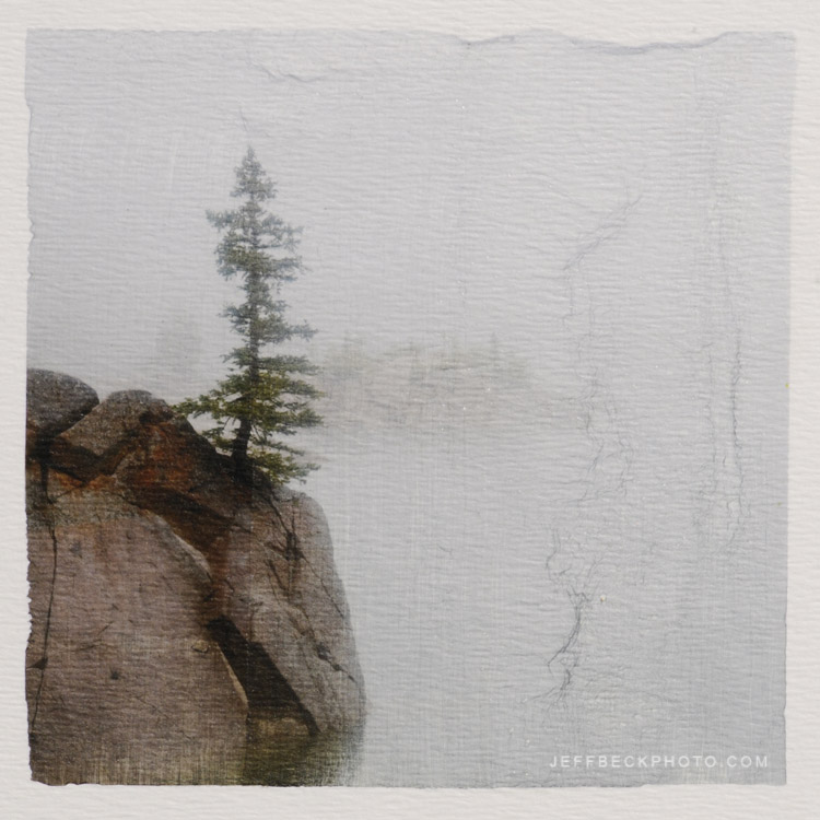 Zen Tree (Pigment Transfer to Board), Lake Mary, Wasatch National Forest, Utah