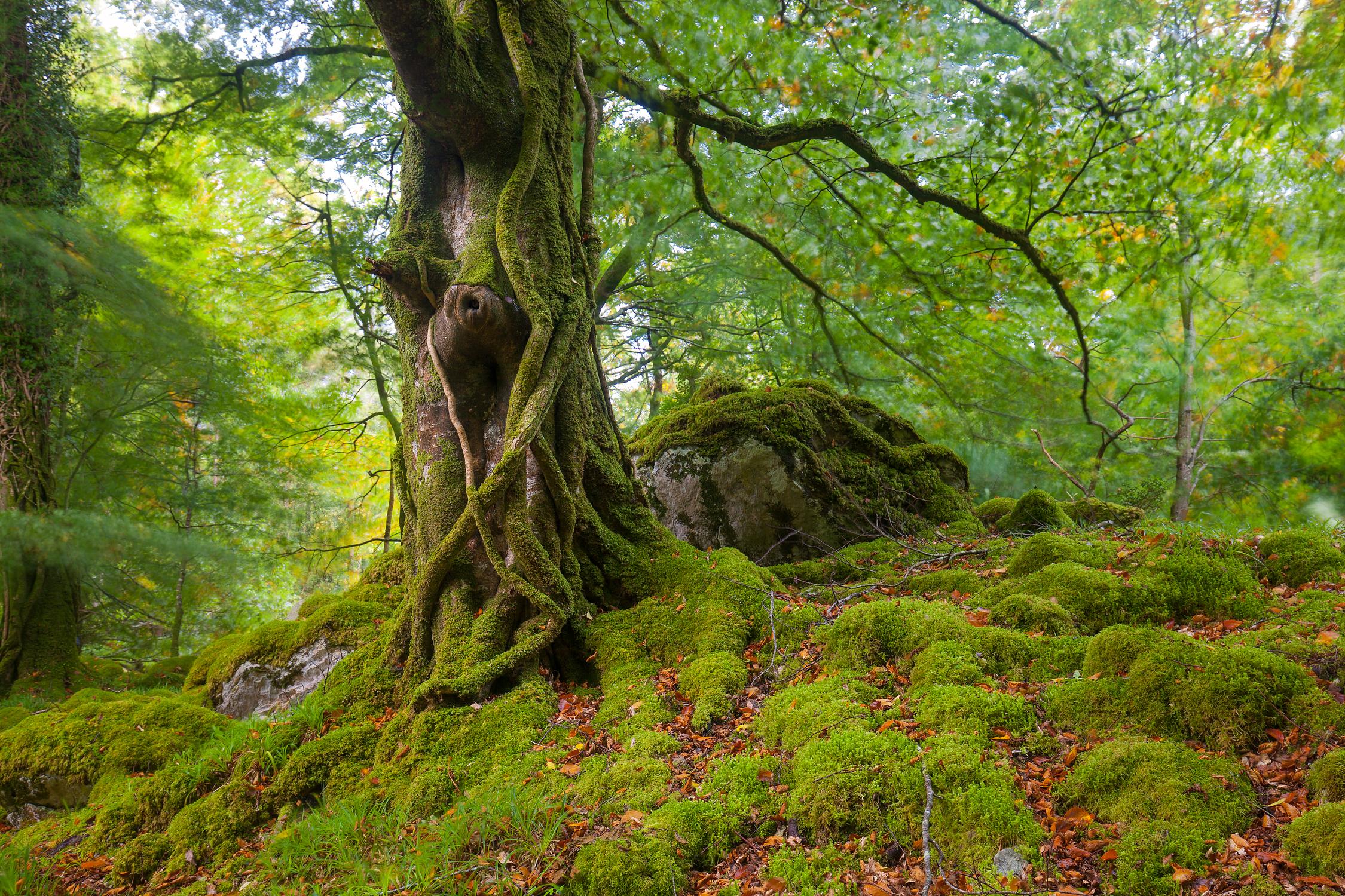 Killarney Woodlands