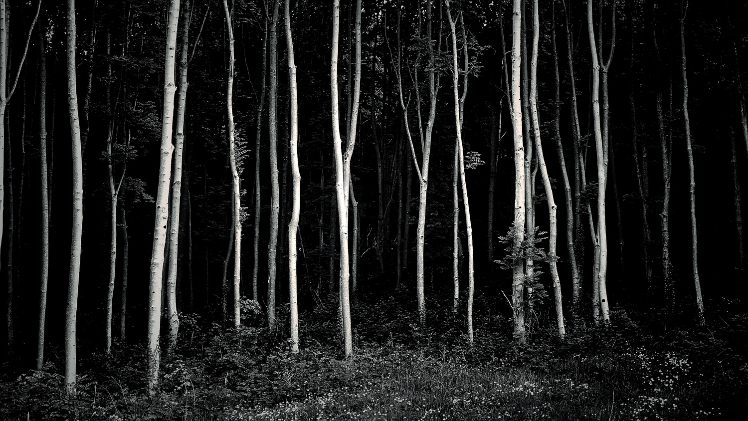 Trees in Monochrome