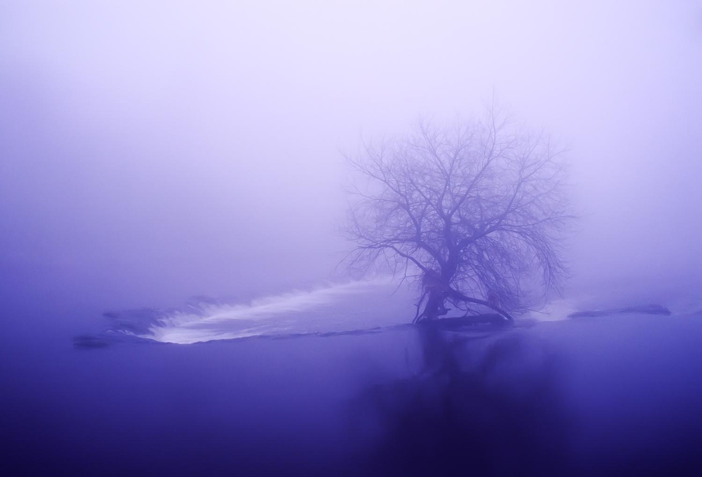 Tree on the River Boyne