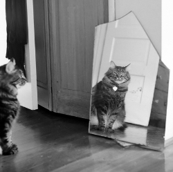 Mirror, mirror ... will my microchip see me home again?