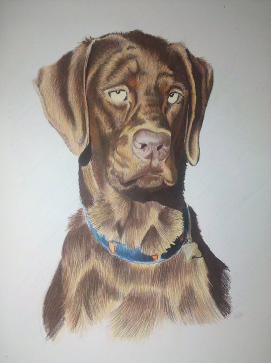 18x24 Prismacolor Color Pencil    For Ashlee Davis courtesy of Carolyn Livesay    Reidsville, NC-Summer 2011