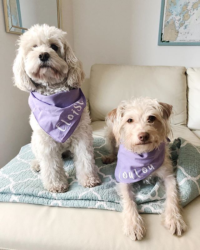 "Swipe for a pic of Eloise trying to block Lou from the treat.  It's the first day of spring which means we got to break out our PASTELS! JK I'm still over here wearing black leggings in every season but @youmethedogs sent over these adorable custom bandanas for the pups! When I heard they donate a portion of every item sold to their local SPCA to support rescues, I got all emotional about it. I love that mission so I've decided to make a donation equal to what I would've payed for these cute dog accessories.  @nationalmilldogrescue has really been pulling at my heart lately as they continue to do big work getting dogs out of horrifying mill operations and rehabilitating them for life in a real home. Lou is a rescue from down south and Eloise is a ""designer dog"" but she came to me by way of rescue when her original owner bought her from a breeder and then learned you can't crate a dog for 12+ hours a day. I mean really, people. Do you want a dog or a hamster?  Getting emotional again as I write this because I want to save all the dogs, everywhere. Gonna start by making a donation and hug my dogs. Yep. I'm not crying you're crying.  Tell me about your dogs. Anything at all. Let's just talk about dogs."