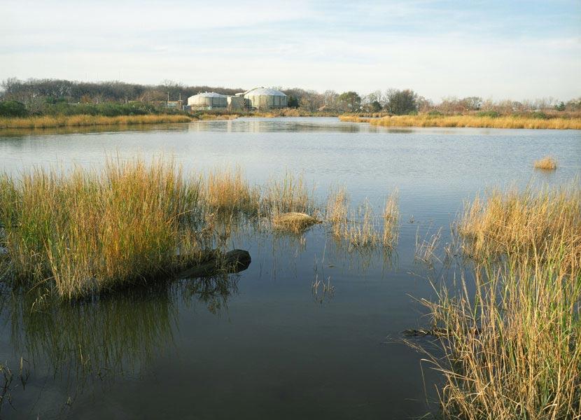mill-creek-sewage.jpg