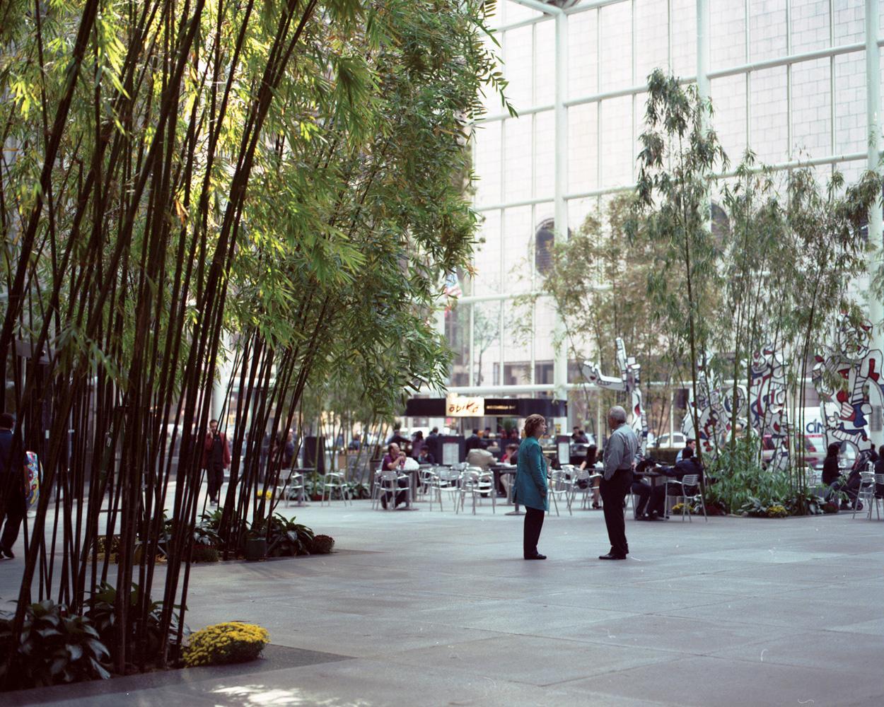 BambooForest1.jpg