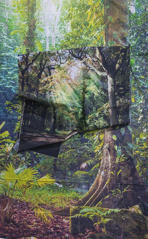 Sunrays in Rainforest, 2017